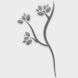 Φυστίκι Αποξηραμένο Ανάλατο 100gr